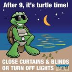 Turtle-layout-R4_Page_3-632x640_large
